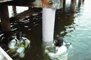fibrwrapwater